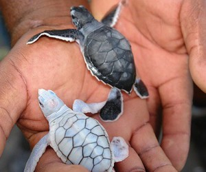 animals, turtle, and turtles image