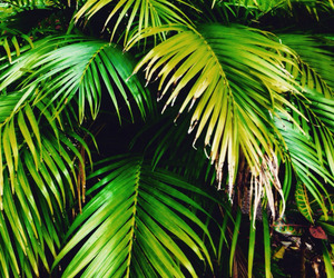 green, nature, and palm tree image