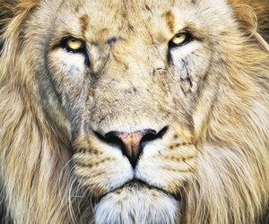 lion and animal image