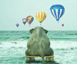 animals and elepelephant image