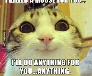 funny, cute, and kitten image