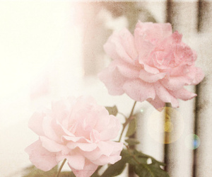 flower, roses, and vintage image
