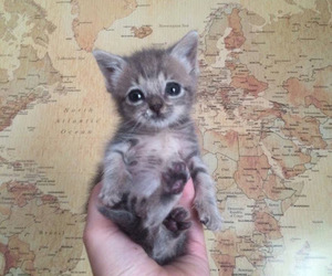 cat, animal, and adorable image