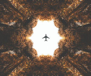 Plane Travel And Tree Image