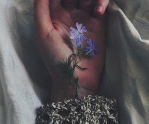 flowers, hand, and indie image