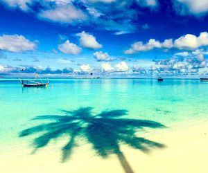 beach, tropical, and Dream image
