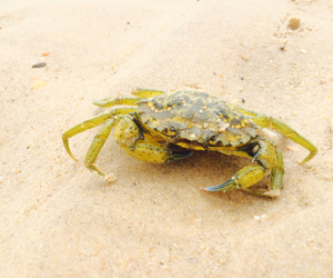 crab, green, and grass image
