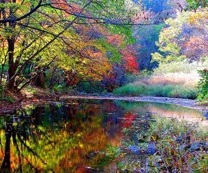 nature, tree, and colorful image