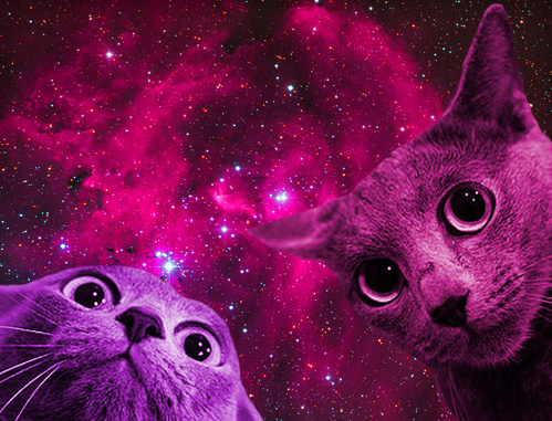SPACECAT APPROVES