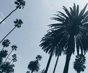 cloudy, palm tree, and grunge image