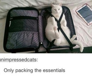 cat, funny, and tumblr post image