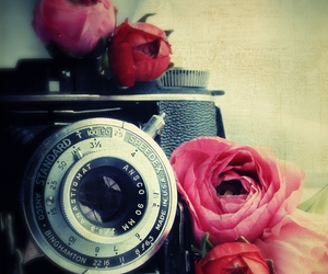 crazy, flowers, and photo image
