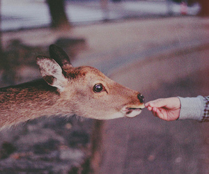 animal, deer, and vintage image