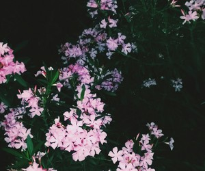 colorful, Darkness, and flowers image