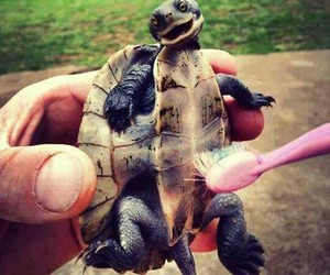 turtle, animal, and happy image