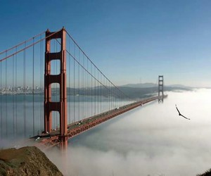 san francisco and bridge image