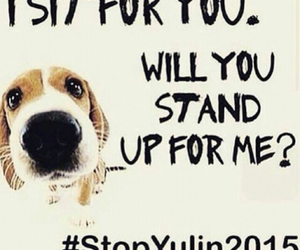 dog, stopit, and stopyulin2015 image