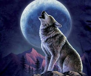 wolf and moon image