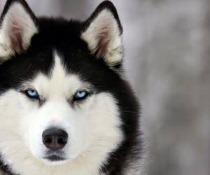 dog, beautiful, and snow image