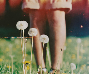 vintage, beautiful, and flowers image