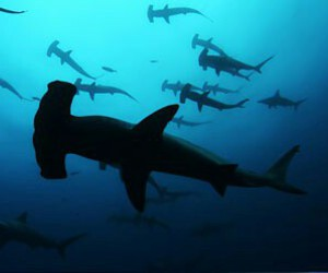 ocean, sharks, and hammerhead shark image