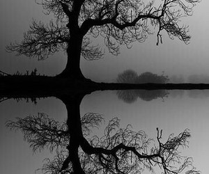 tree, black and white, and reflection image