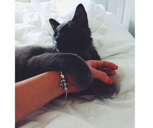 cat, grunge, and jewelry image