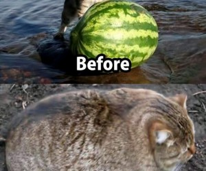 funny, cat, and joke image