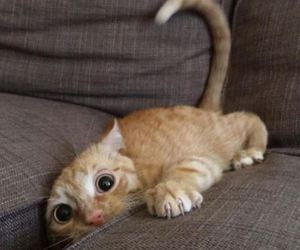 cat, crazy, and funny image