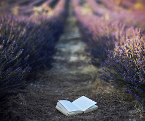 book, photography, and Dream image