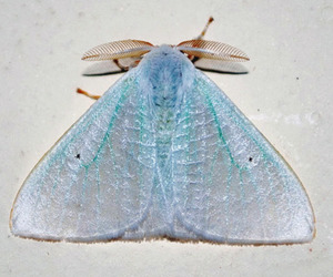 blue, moth, and butterfly image