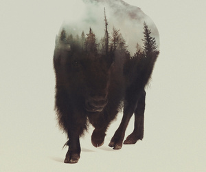 animal, art, and bison image