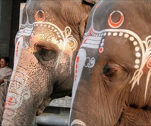 elephant, beautiful, and paint image