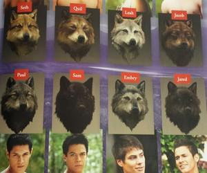 twilight saga and wolf image