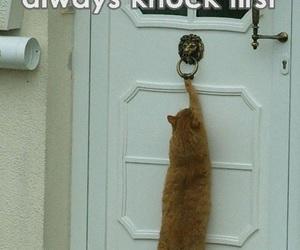 animals, cats, and door image