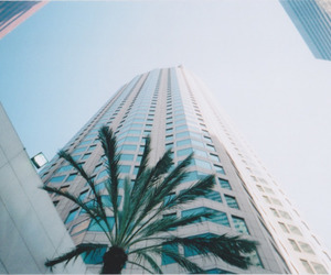 palms, building, and summer image