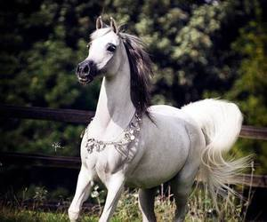 beauty, elegance, and horse image