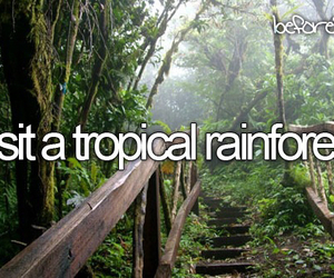 tropical, rainforest, and Dream image