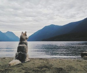 dog, lake, and mountains image