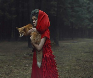 fox and red image