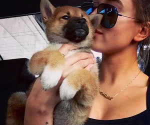 dog, hailey baldwin, and puppy image