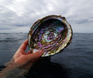 sea, shell, and ocean image