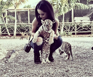becky g, tiger, and animal image