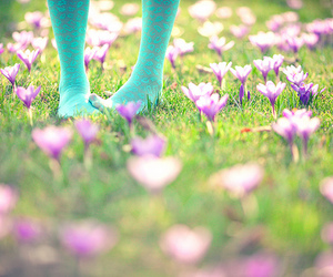 flowers, grass, and purple image