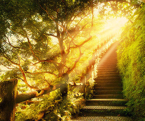 nature, stairs, and sunlight image