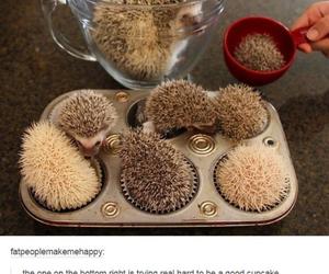 cupcakes, tumblr posts, and hedgedog image