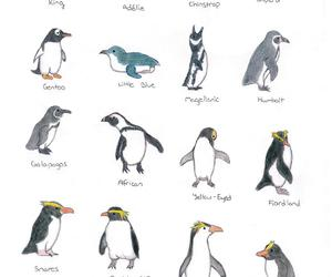 penguin and animals image