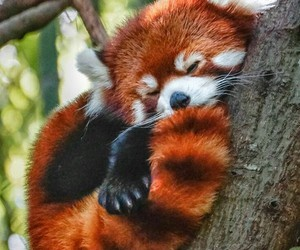 adorable, kawaii, and tree image
