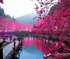 pink, japan, and tree image