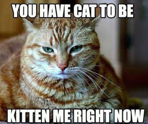 cat, funny, and puns image